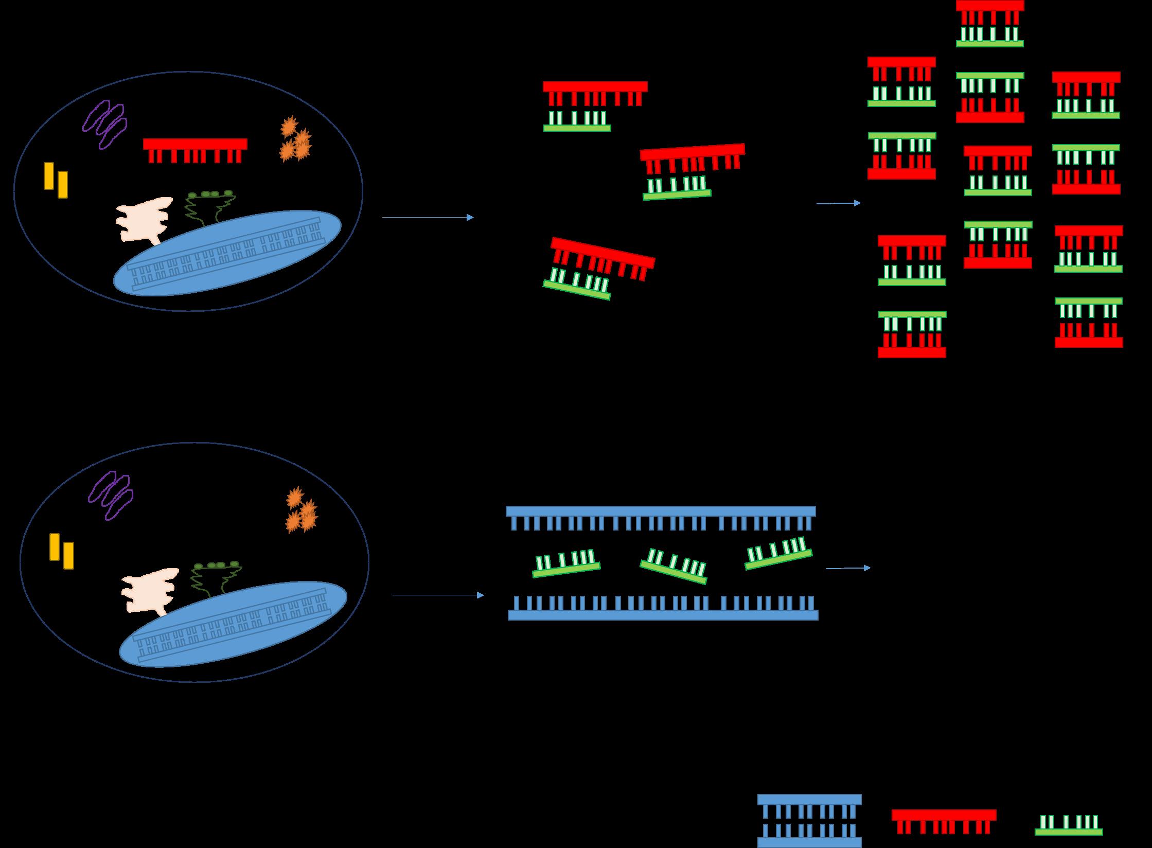 Imagem PCR
